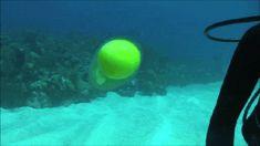 Un oeuf sous l'eau sans sa coquille