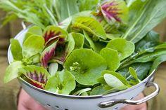 Space-saving veg crops to grow