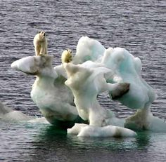 Polar Bears stranded on melting ice berg. wow i thought those were just cartoons
