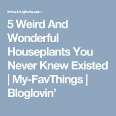 5 Weird And Wonderful Houseplants You Never Knew Existed | My-FavThings | Bloglovin'