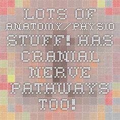 Lots of Anatomy/Physio stuff! Has Cranial Nerve Pathways too! Speech Language Pathology, Speech And Language, Cranial Nerves, Optometry, Pathways, Anatomy, Potato Humor, Paths, Languages