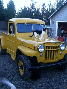 1956 Willys Truck - Photo submitted by Todd Taylor. Who would have thought that a Willys could attract pussy? Old Jeep, Jeep Tj, Jeep Truck, Jeep Pickup, Pickup Trucks, Willys Wagon, Jeep Willys, Pick Up, Dodge Trucks