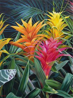 Carol Sims, Bromeliads