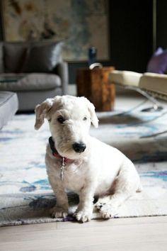 A white, fluffy cutie.