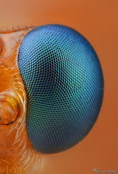 "Incredible detail.  ""Parasitoid Wasp's eye"" by Yousef Al Habshi, via 500px."