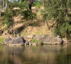 Wayne Miles The Lachlan River at Cowra 3810