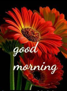 472 best Good Morning Gif photos by sonusunariya Good Morning Image Quotes, Good Morning Images Flowers, Good Morning Cards, Morning Thoughts, Good Morning Sunshine, Good Morning Picture, Good Morning Messages, Good Morning Good Night, Morning Pictures
