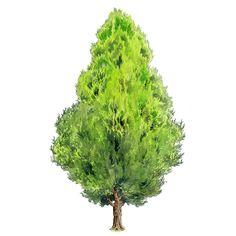 Ideas Landscape Arquitecture Texture For 2019 Landscaping Around Trees, Driveway Landscaping, Landscaping With Rocks, Modern Landscaping, Landscaping Software, Landscape Design Plans, Landscape Edging, Watercolor Trees, Watercolor Landscape