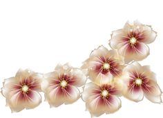 [RES] Brown Flowers PNG by HanaBell1.deviantart.com on @deviantART