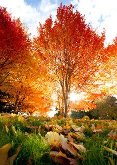 Fiery Fall Color.  Fabulous!