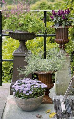 ideen f r eine herbstlich gestaltete terrasse pinterest anemone winterhart und efeu. Black Bedroom Furniture Sets. Home Design Ideas