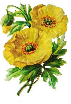 Poppy Flower Painting, Flower Art, Flower Images, Flower Pictures, Chinese Flowers, Christmas Decals, Art Vintage, Die Cut, Mandala Drawing