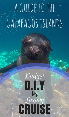 The Galapagos Islands are a unique archipelago just 2 hours flight off the western coast of Ecuador. It's home to species found nowhere else in the world as well as those who specifically evolved to fit in with the Galapagos' surroundings. Wildlife includes the giant tortoise, blue footed booby, flightless cormorant and the Galapagos fur seal. If you want to visit the Galapagos you can choose to take a cruise or do it yourself. Here we weigh up both options so you can make an...