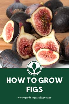 How to Grow Figs at Home (Quick Tips) - Garden Gear Shop Gardening For Beginners, Gardening Tips, Growing Fig Trees, Figs Benefits, Good Source Of Fiber, Tree Pruning, Fresh Figs, Tree Care, Garden Guide