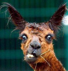 Google Image Result for http://webecoist.com/wp-content/uploads/2010/06/ugliest_animals_EP.jpg