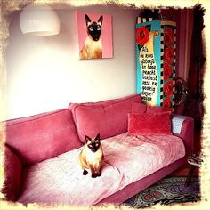 Proud Katrientje & her painting Pink Couch, Cat Art, Holland, Villa, Interiors, Interior Design, Cats, Painting, Instagram