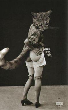 Meow~♛