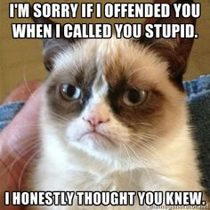 Grumpy Cat this you're stupid.