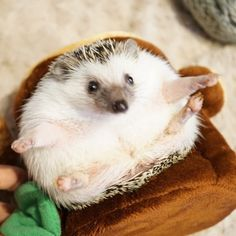 What are hedgehogs even made of