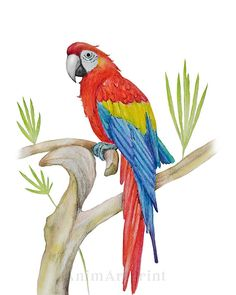 Art Drawings For Kids, Bird Drawings, Animal Drawings, Parrot Drawing, Parrot Painting, Tattoo Bunt, Calligraphy Drawing, Colorful Parrots, Bird Artwork
