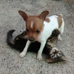 28 Dogs And Cats Proving That Love Conquers All