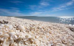 *****Praia das Conchas, Austrália Localizada em Shark Bay, na parte ocidental do país, a curiosa praia está coberta por uma grossa camada de conchas (de 7 a 10 metros de altura) ao longo de toda a costa. A água perto da praia é muito salgada, o que permite que pequenos moluscos se reproduzam sem a ameaça de predadores. Depois, eles deixam suas cascas no local.