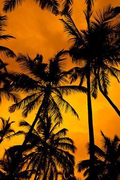 color pattern, shadow, black, orange, photography, beach, palm tree,
