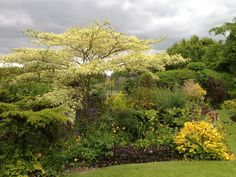 We're always amazed at what colours appear. NGS Gardens open for charity - Garden