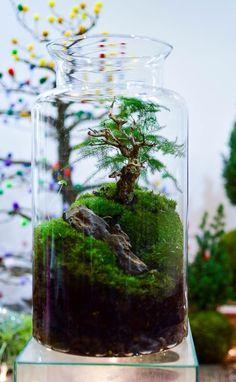 Bonsai Terrarium For Landscaping Miniature Inside The Jars 101