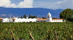 Rodeada de un paisaje tallado por el sol, las montañas y los viñedos, El Esteco es una de las bodegas de alta gama de Cafayate