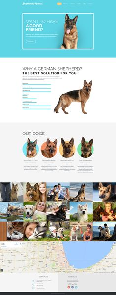 Shepherds Kennel Responsive Moto CMS 3 Template #59537