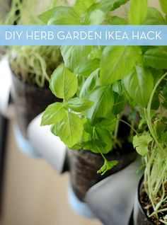 How To: Indoor Herb Garden Ikea Hack