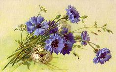 Catharina Klein.цветы-1. Обсуждение на LiveInternet - Российский Сервис Онлайн-Дневников