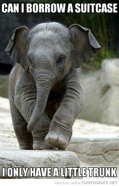 Elephant travel.