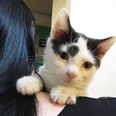New Treatment Offers Hope For Cats with FeLV and FIV | Catster