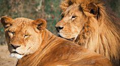GREAT TRANS-AFRICAN SAFARI - 2014 Cultural tour & Safari of Namibia, Botswana & Zimbabwe  Click image for more details