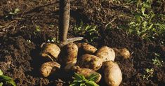 Fertilizing Plants 101: Everything You Need to Know to Do It Right