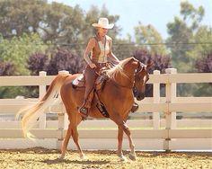 Arabian Chestnut Horse Western