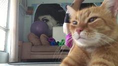 Un gato arruinó un tutorial de yoga | ElDoce.tv