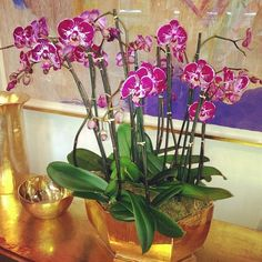 6 Places Perfect for Orchids