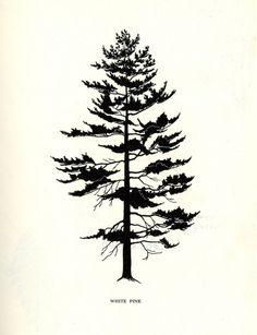 white pine silhouette - Google Search