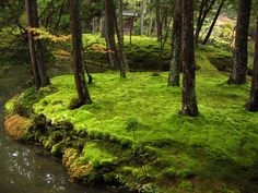 """ancient japanese gardens   ... its moss garden, is commonly referred to as """"Koke-dera"""" (苔寺"""