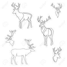 Illustration of One line design silhouette of deer. Set of full height and heads. Hand drawn single continuous line minimalism style vector illustration vector art, clipart and stock vectors. Reindeer Tattoo, Reindeer Drawing, Line Sketch, Line Drawing, Cartoon Drawings, Art Drawings, Deer Illustration, Deer Art, Continuous Line