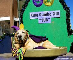 0172644674c81 If you& looking for family-friendly Mardi Gras fun, Lafayette& Krewe des  Chiens Annual Dog Parade is a must-do.