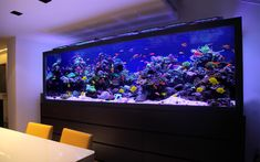 This luxury fish tank design, custom made aquarium for a luxury London townhouse has been listed as one of the most outstanding aquariums in the world. Diy Aquarium, Aquarium Design, Coral Reef Aquarium, Nature Aquarium, Marine Aquarium, Aquarium Decorations, Aquarium Fish Tank, Aquarium Ideas, Cool Fish Tanks