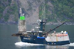 Looking for Alaskan halibut
