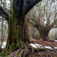 Árboles en Parque Natural Lago de Sanabria y Sierras Segundera y de Porto (Zamora) Reserva Natural, Plants, Nature, Trekking, Waterfalls, Paths, Scenery, Fotografia, Planters