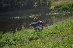 Gårdstunet Hundepensjonat: En deilig dag med fine gjester!