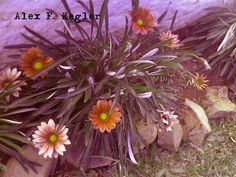 Alex photograph project: Flowers... #Photography