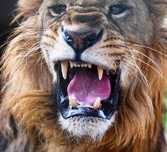 Silhouette Clip Art, Animal Silhouette, Forest Animals, Woodland Animals, Serengeti National Park, Wildlife Park, Green Nature, Travel Tours, Leopards